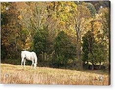 Acrylic Print featuring the photograph Fall Grazing by Joan Davis