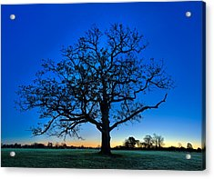 Fall Great Oak At Dawn Acrylic Print