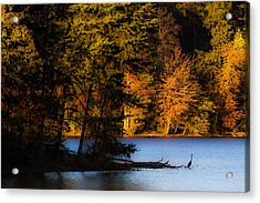 Fall Heron Acrylic Print