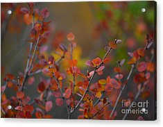 Acrylic Print featuring the photograph Fall In Alaska by Kate Avery