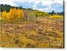 Fall In Colorado Acrylic Print by Baywest Imaging