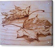 Fall In Acrylic Print by Cynthia Adams