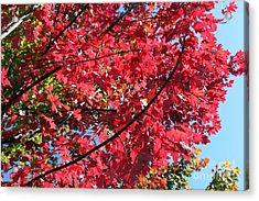 Acrylic Print featuring the photograph Fall In Illinois by Debbie Hart
