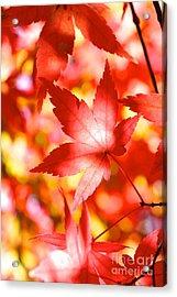Fall In Love  Acrylic Print