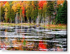 Fall In Maine Acrylic Print by Arie Arik Chen