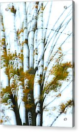 Fall In Motion Acrylic Print by Karol Livote