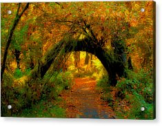 Fall In Olympia National Forest Acrylic Print