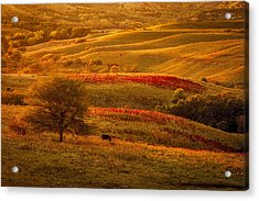 Fall In The Flint Hills Acrylic Print by Scott Bean