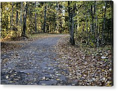 Fall In The North Woods Acrylic Print by Birgit Tyrrell