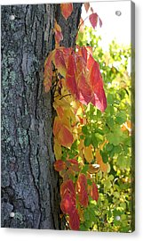 Fall In The Orchard Acrylic Print by Mary Bedy