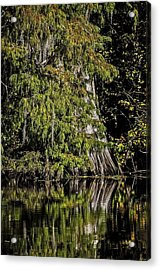 Fall In The Swamp Acrylic Print by Andy Crawford