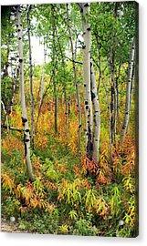 Fall In The Tetons Acrylic Print by Marty Koch