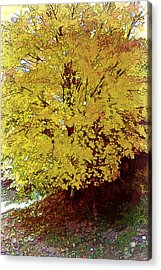 Fall In Yellow Acrylic Print by Larry Bishop