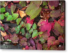 Acrylic Print featuring the photograph Fall Ivy by Wayne Meyer
