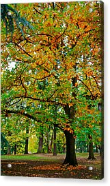 Fall Kissing The Leaves  Acrylic Print by Rae Berge