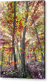 Fall Laser Beams Acrylic Print by Debra and Dave Vanderlaan