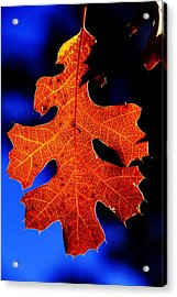 Fall Leaf Closeup Acrylic Print