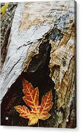 Fall Leaf Acrylic Print