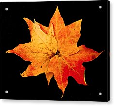Acrylic Print featuring the photograph Fall Leaf Trio by Dee Dee  Whittle