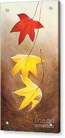 Fall Leaves 2 Acrylic Print by Teresa Wadman
