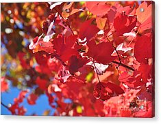 Acrylic Print featuring the photograph Fall Leaves In Oregon by Mindy Bench
