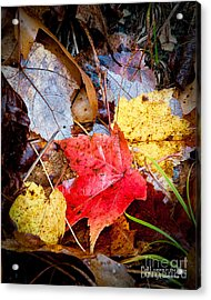 Acrylic Print featuring the photograph Fall Leaves In The Rain by David Perry Lawrence