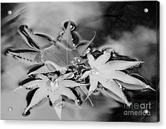 Fall Leaves In The Rain Acrylic Print