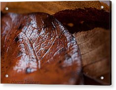 Acrylic Print featuring the photograph Fall Leaves by Haren Images- Kriss Haren