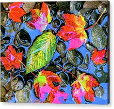 Fall Leaves On Black Rocks In Water Acrylic Print