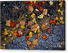 Fall Leaves On Pavement Acrylic Print by Elena Elisseeva