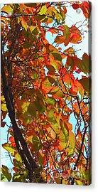 Fall Leaves Acrylic Print by Scott Cameron
