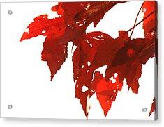 Fall Leaves Acrylic Print by Susie DeZarn