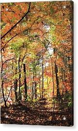 Fall Light Acrylic Print