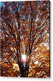 Fall Light Acrylic Print