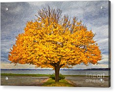 Fall Linden Acrylic Print by Verena Matthew