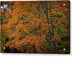 Acrylic Print featuring the photograph Fall Maples - 05 by Wayne Meyer
