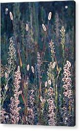 Fall Meadow Backlit Acrylic Print