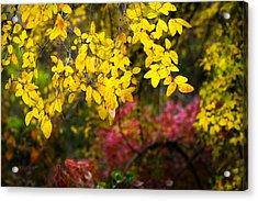 Fall Medley Acrylic Print