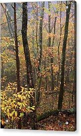 Fall Mist Acrylic Print