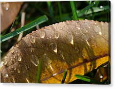Fall Morning Leaf And Dew Acrylic Print