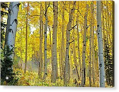 Fall Morning Shine Acrylic Print