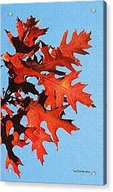 Fall Oak Leaves Acrylic Print