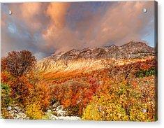 Fall On Display Acrylic Print