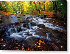 Acrylic Print featuring the photograph Fall On Fountain Creek by Ronda Kimbrow