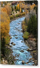 Fall On The Gros Ventre River Acrylic Print