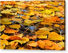 Fall On The Water  Acrylic Print by Kevin Bone