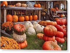 Fall Pumpkins And Gourds Acrylic Print