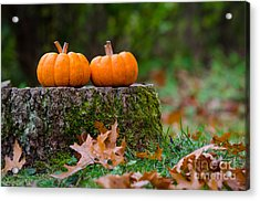 Fall Pumpkins Acrylic Print by Mike Ste Marie