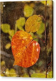 Fall Quaking Aspen Acrylic Print