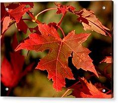 Fall Red Beauty Acrylic Print